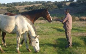 horses-img-1