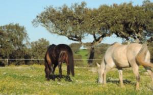 horses-img-3