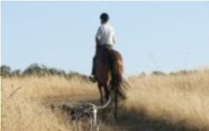 horses-img-8