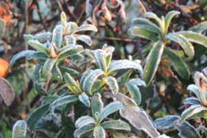 1502 frosty morning (2)