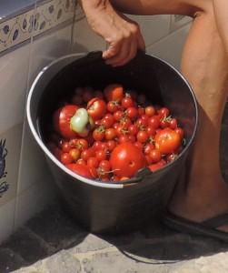 1509 veggies (3) a