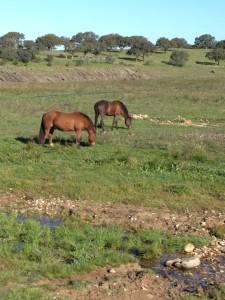 1601 horses (1)