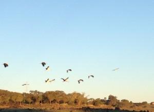 1601 storks (13)