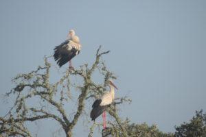 1605-birdwatching-31