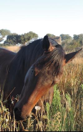 horses-img-11